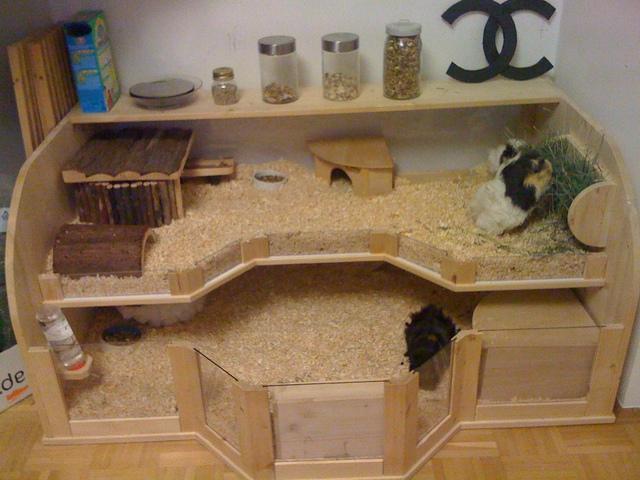 Meerschweinchen Stall Bauen