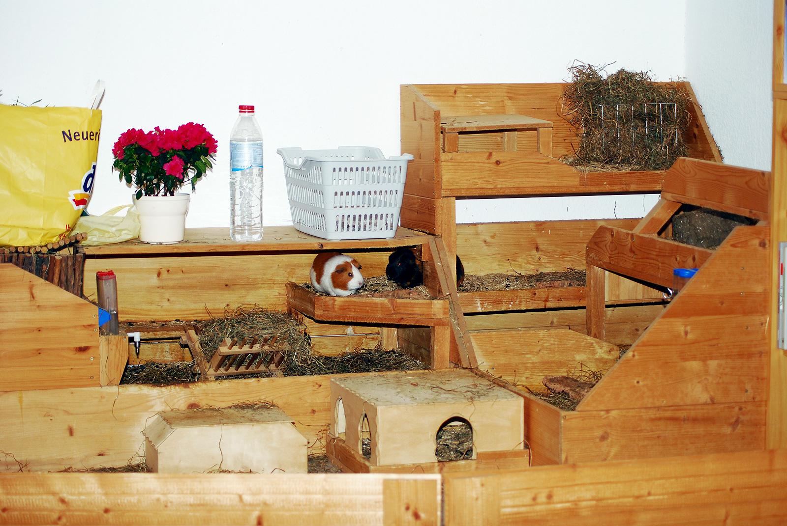 der k fig von meerschweinchen. Black Bedroom Furniture Sets. Home Design Ideas