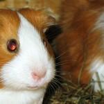Tierheim, Züchter oder Zoohandlung?