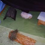 Meerschweinchen Gehege Fleecehaltung