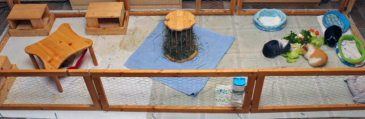 klappgehege f r meerschweinchen die g nstige haltung so geht 39 s. Black Bedroom Furniture Sets. Home Design Ideas