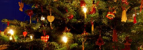Ursprung Weihnachtsbaum.Dürfen Meerschweinchen Den Weihnachtsbaum Fressen